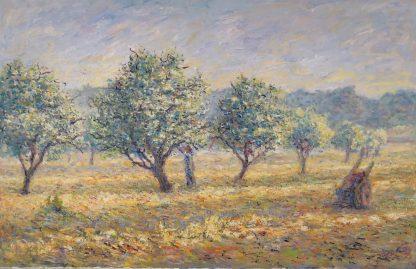 Les oliviers en Corse
